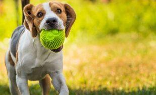 hond-met-bal-spelen